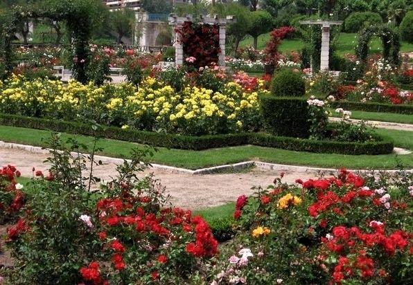 Jardín con rosas rojas