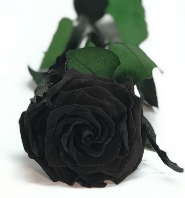 rosa eterna de color negra