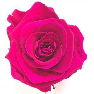 Rosa fucsia eterna