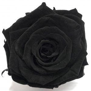 rosa eterna Negra
