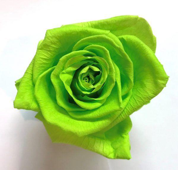 Rosa eterna verde