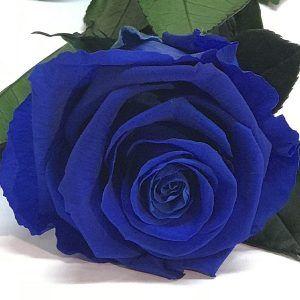 Rosa eterna de color azul fuerte
