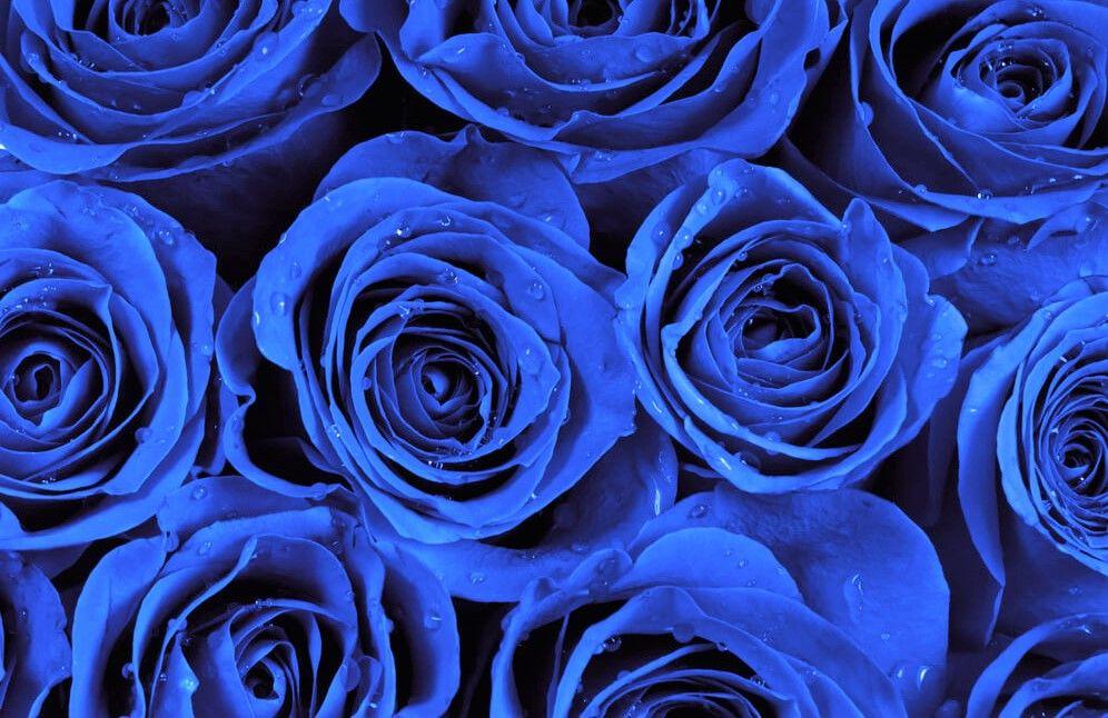 Rosas Azules Significado