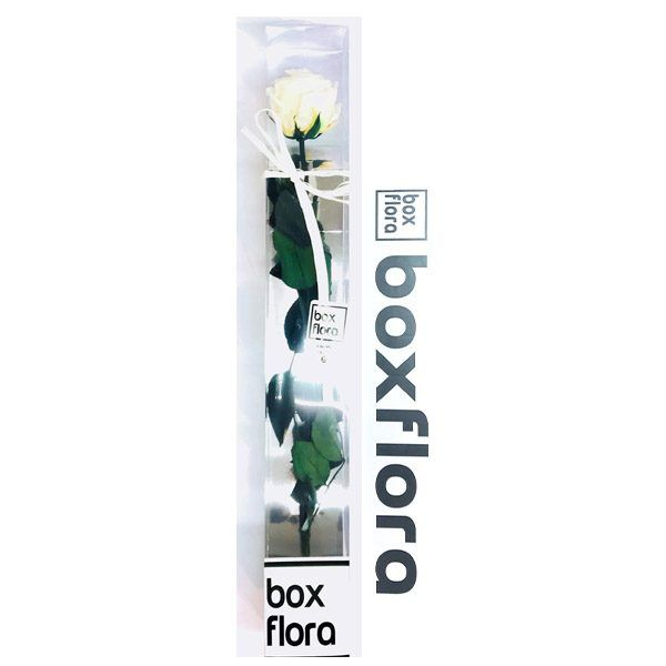Rosa blanca de color blanca en caja