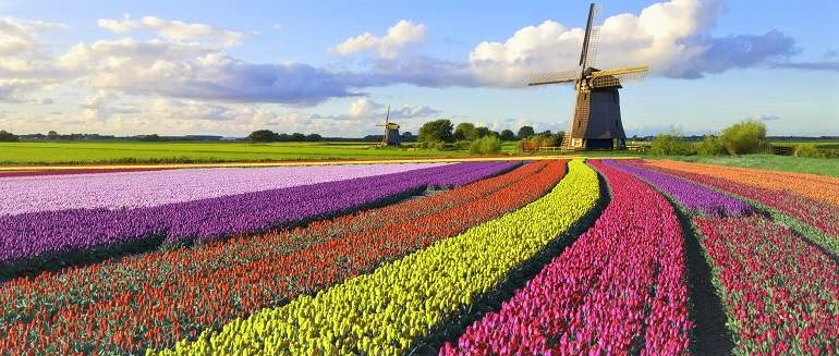 Campo-de-tulipanes