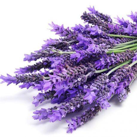 lavanda-planta-medicinal