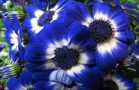 soñar-con-flores-azules