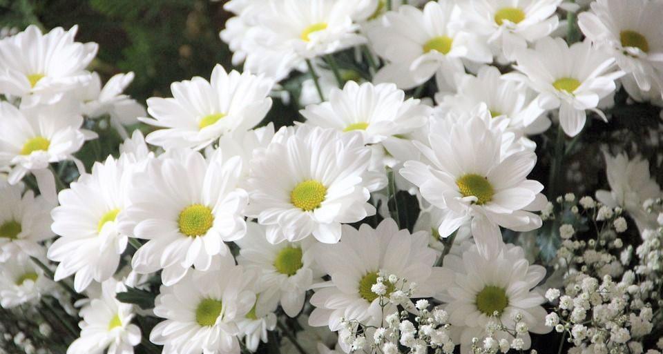 soñar-con-flores-blancas