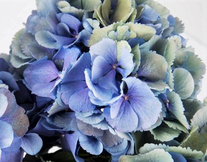5-maneras-secar-flores-rapido