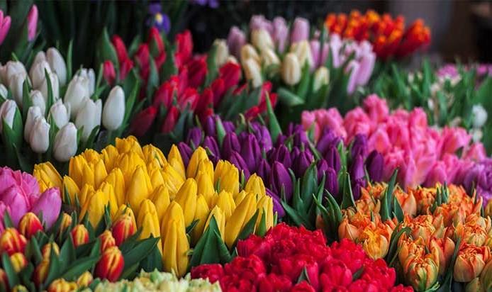 Tulipomanía