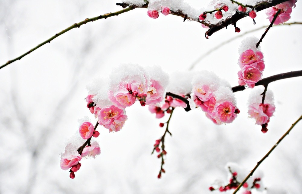 flores-de-invierno