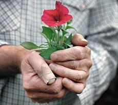 flores-para-anciana