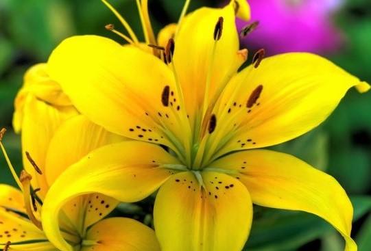 Las flores más vendidas