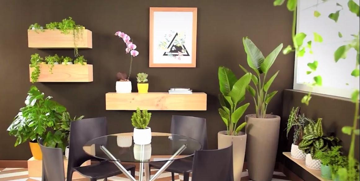 los beneficios de plantas en casa