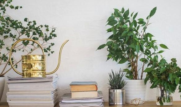 plantas-de-interior-sus-cuidados