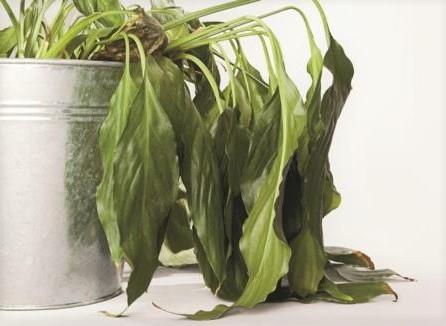por-que-se-mueren-las-plantas