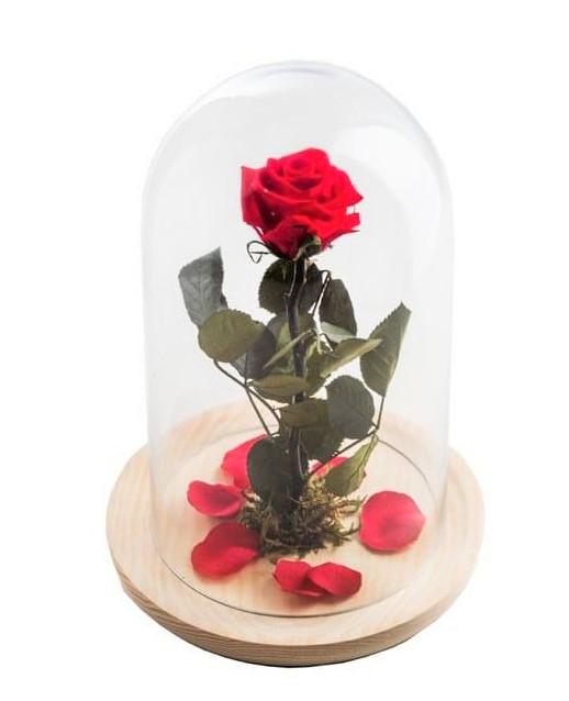 como-se-hacen-las-rosas-preservadas