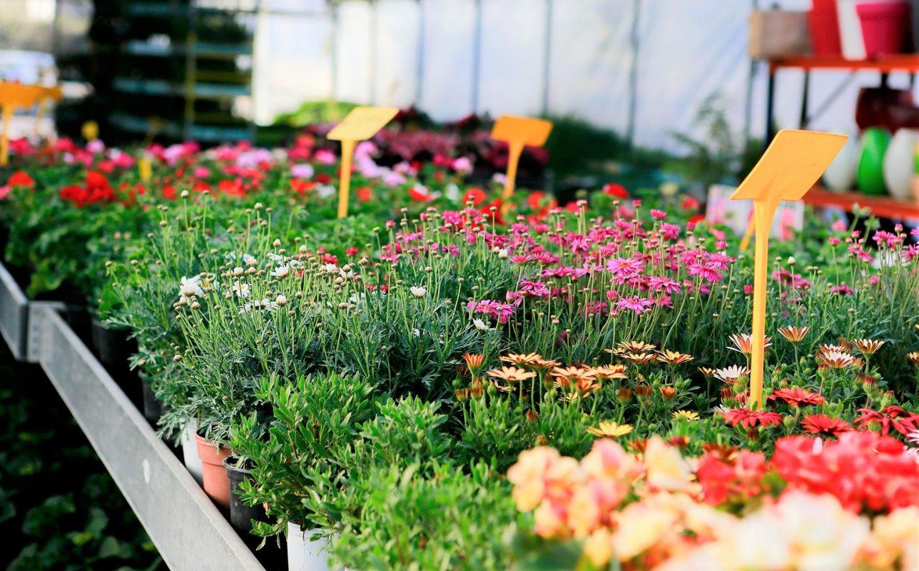 viveros-plantas-exterior