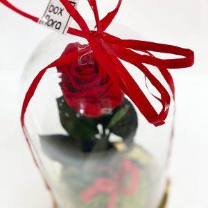 Flor-de-la-Bella-y-la-Bestia