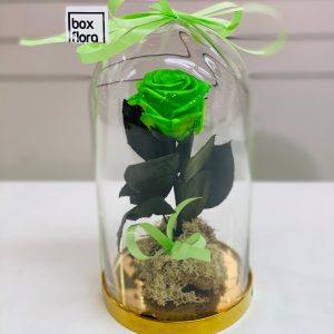 rosa-bella-y-bestia-verde