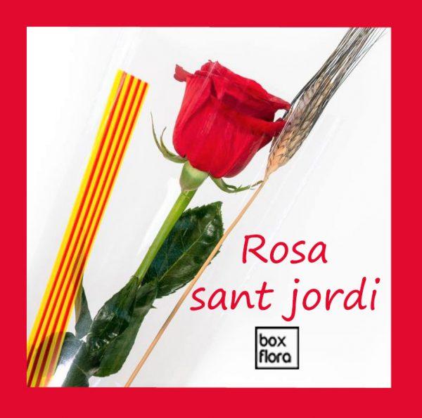 rosas-sant-jordi-2020