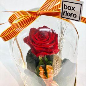 Rosa-sant-Jordi-2021-en-capsula