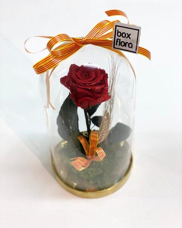 Rosa-eterna-capsula-san-Jordi