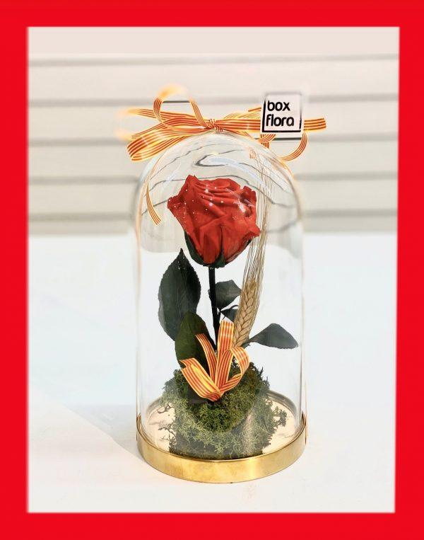 Rosa-de-Sant-Jordi-en-capsula-2020