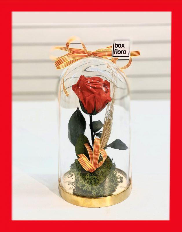 Rosa-eterna-Sant-Jordi-en-capsula-2020